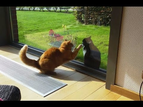Cats Fighting Through Glass Doors Compilation 2016 [NEW]