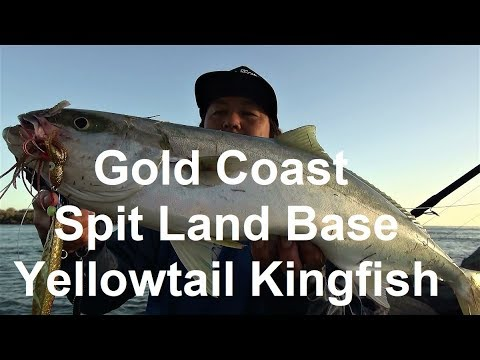 Gold Coast Spit Land Base Yellowtail Kingfish Rocky D Fishing Vol.85