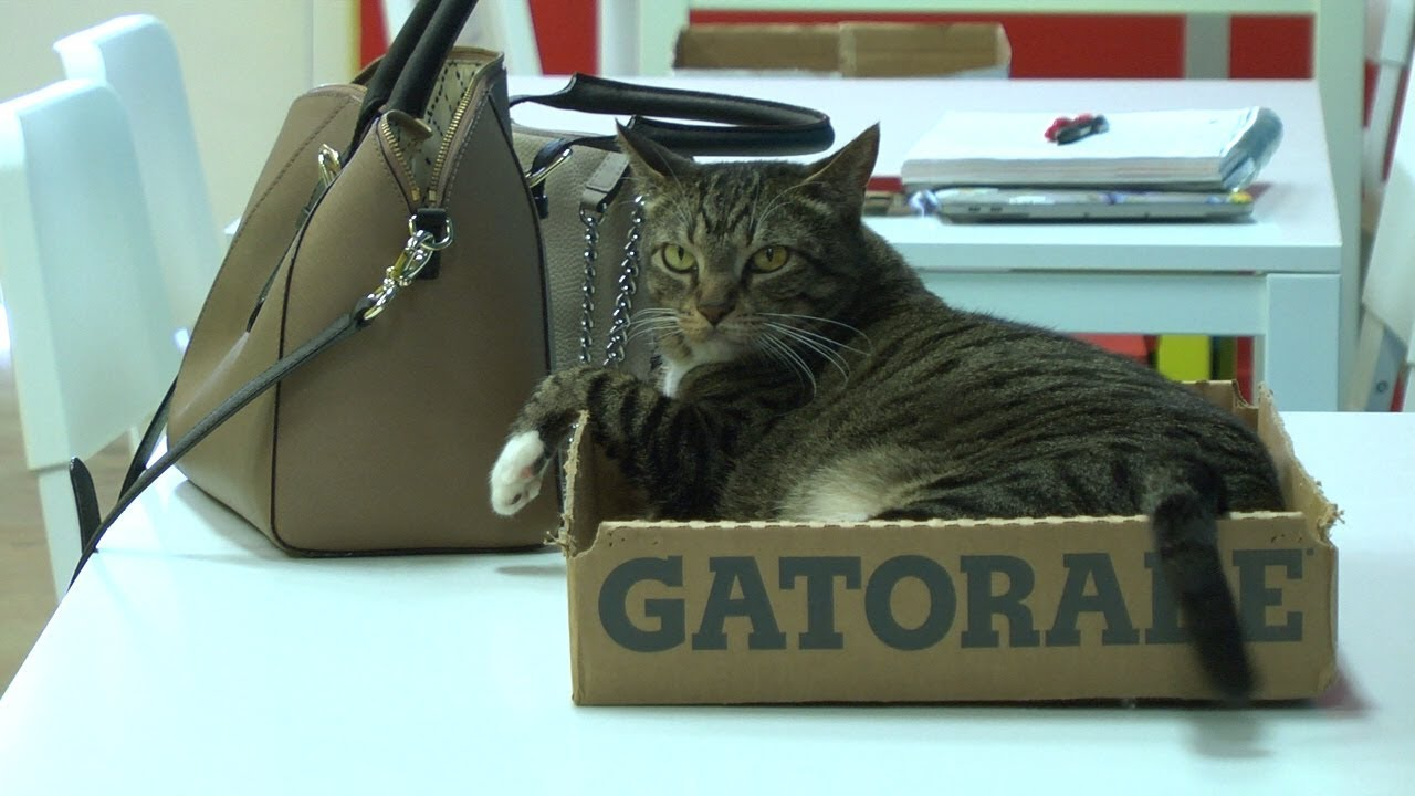 Cattery Lounge & Snackery