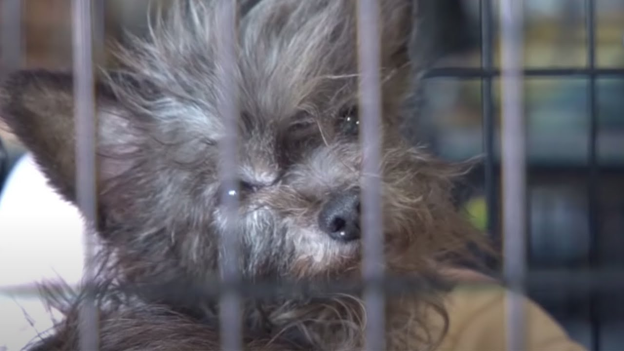 More Than 100 Animals Rescued From Arkansas Puppy Mill Youtube