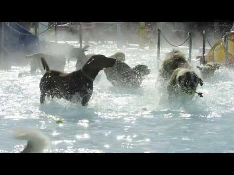 Dog Day at Osborn Aquatic Center 2013