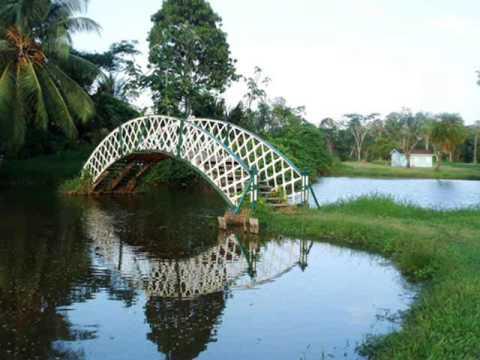 Thurston Gardens -  View of Thurston Gardens Picture of Fiji Museum, Suva
