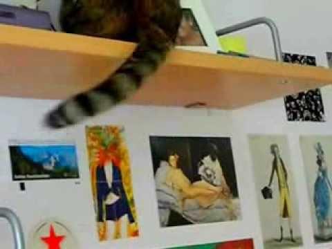 Cat Jukebox