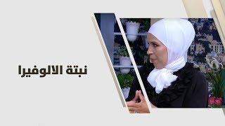 م. أمل القيمري - نبتة الالوفيرا