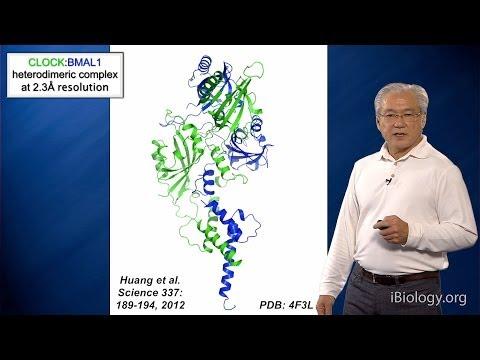 Joseph Takahashi (UT Southwestern/HHMI) Part 3: Circadian Clocks: Molecular Basis of a Clock