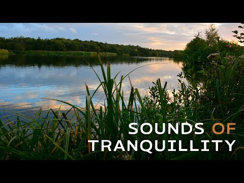 Sounds of Tranquillity