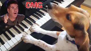 Best of Amazing Animal Auditions On Got Talent World Wide