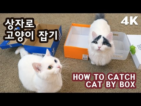상자로 고양이 잡기 [4K] HOW TO CATCH CATS BY BOX