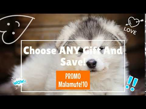 Alaskan Malamute Gift Selection From Pawick