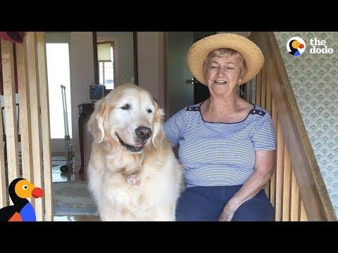 Morgen - Senior Dog Loves Visiting His Neighbor