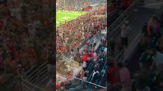 FANS CATCH FALLING CAT AT MIAMI GAME  #shorts