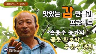 감 재배 기술/꽃눈 확보/수분수 관리(feat.손동수 …