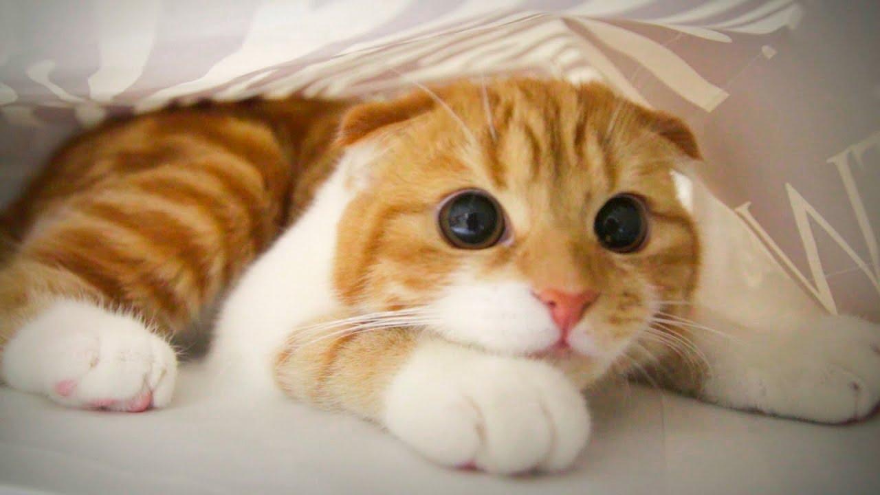 Image Noel Grumpy Cat