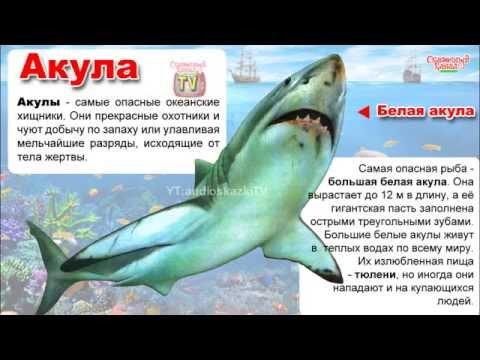 Читать онлайн Акулы из стали автора Овечкин Эдуард
