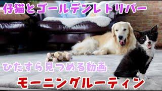 【保護猫】にゃにゃこがいるモーニングルーティンをひたすら見る動画