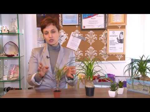Полезные советы: Цветы в офисе