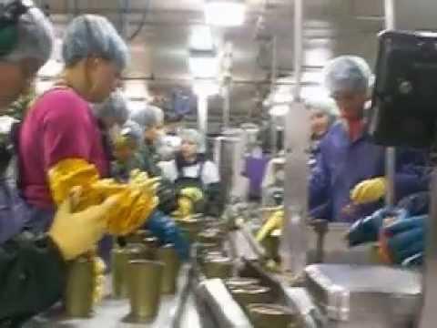 SEWARD ALASKA  Work-canary-Icicle Seafoods MOLDOVA WORKTRAVEL