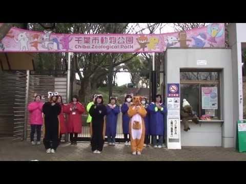 恋するフォーチュンクッキー I Love 千葉市動物公園 Ver.