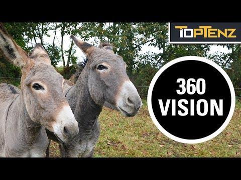 10 Radically Different Ways Animals See the World