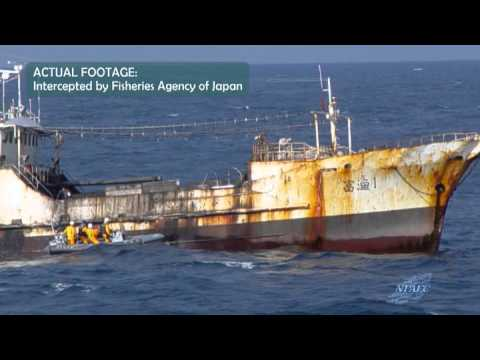 North Pacific Anadromous Fish Commission (NPAFC) Promotional Video (in English)