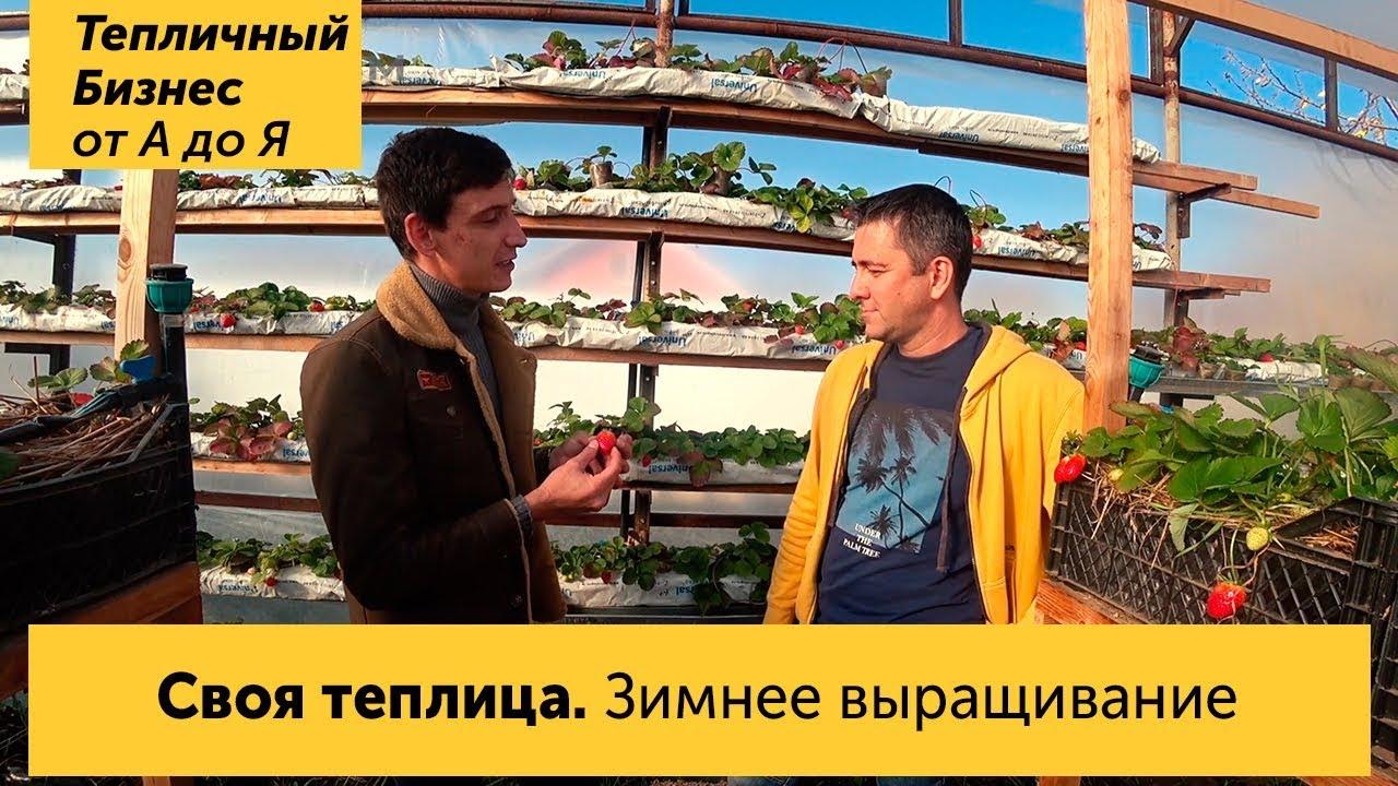 """Теплица своими руками. Зимнее выращивание клубники. Автор канала """"Огород над землёй"""""""
