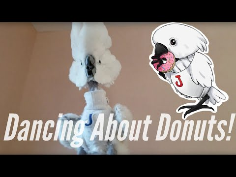 Jersey the Cockatoo Dancing To The Donut Thief Song   PARROT VIDEO OF THE DAY