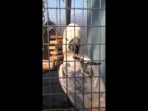 Hamilton Aviary 1