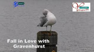 20211014, Fall in love with Gravenhurst, Ontario, Canada, 加拿大旅遊景點