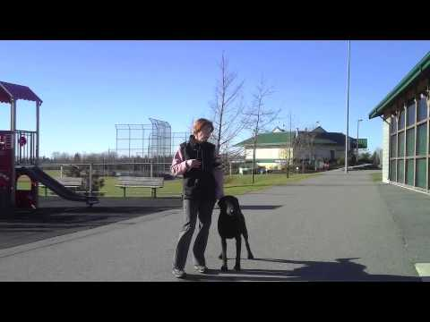 Pounce & Remi Heeling from YouTube · Duration:  4 minutes 54 seconds