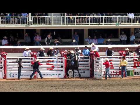 Saddle Bronc Riding at the Calgary Stampede July 5 2015