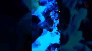 Kemer Aura clup foam show (köpük partisi)