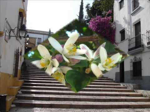 Sevillana - Senderos - Nostalgia.wmv