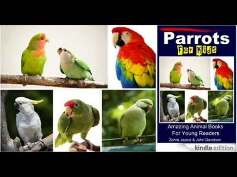 Where Parrots Live – Parrots For Kids – Amazing Animal Books For Young Readers