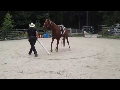 Rescue Arab helping me to draw a lunge circle