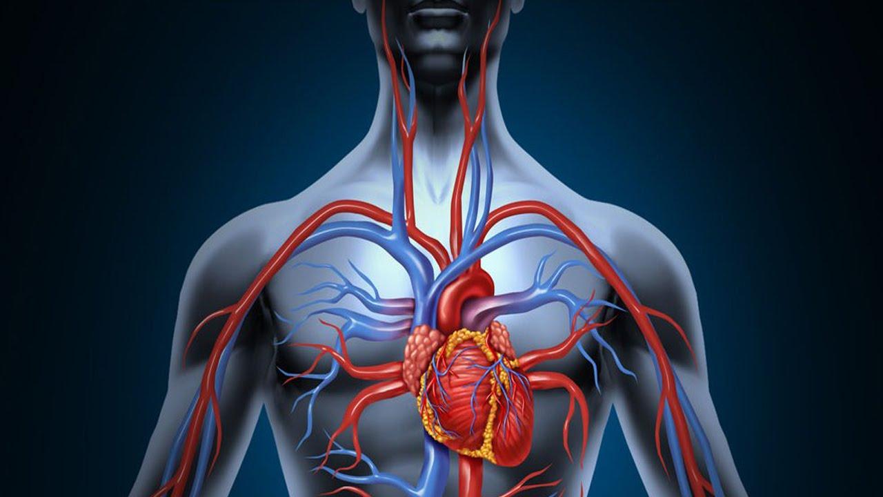 Resulta ng larawan para sa blood circulation