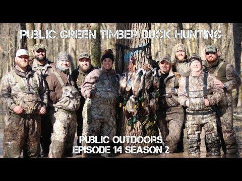 Public Green Timber Duck Hunting Arkansas 20172018