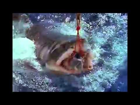 Om Nom Nom Song- Shark Version For Shark Week!