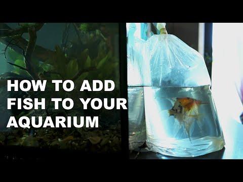 Fische richtig in dein Aquarium einsetzen | How To