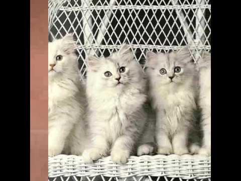 รวมรูปแมวน่ารักๆ