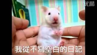 """老鼠聽到""""唸你""""的反應 thumbnail"""