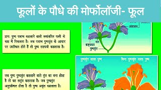 Morphology of Flowering Plants - Flowers | Corolla | Aestivation | Gynoecium | Androecium | in Hindi