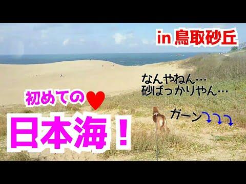 【🐶保護犬と初めてのお泊まり旅♥】はーちゃんVlog《鳥取旅行 前編》