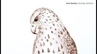 Cómo dibujar un halcón con pluma fuente - Narrado