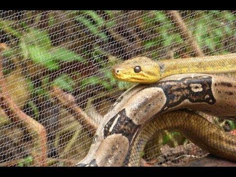 Hidden Zoo Tobago