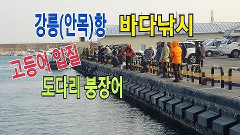 """강릉 바다낚시""""강릉항 고등어 낚시"""" 안목항 원투낚시,붕장어,도다리"""