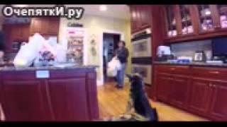Сын пугает маму собакой