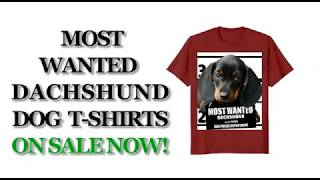 Most Wanted Dachshund (Wiener) Cute Funny T shirt - Men's, Women's, Kid's - Black, Red, Pink