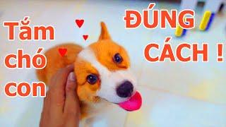 Cách tắm cho chó c๐n đúng cách, tránh được bệnh VIÊM PHỔI cнo chó