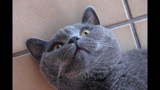 Лучшие приколы c животными май 2019 смешные собаки коты котята greenli