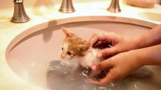 Download First bath for foster kittens Mp3 and Videos